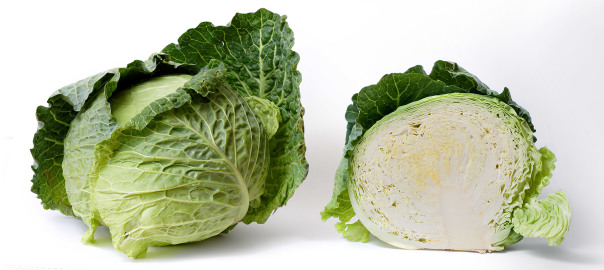 can rabbits eat cabbage